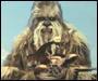 Profil PSW Wookieecookies