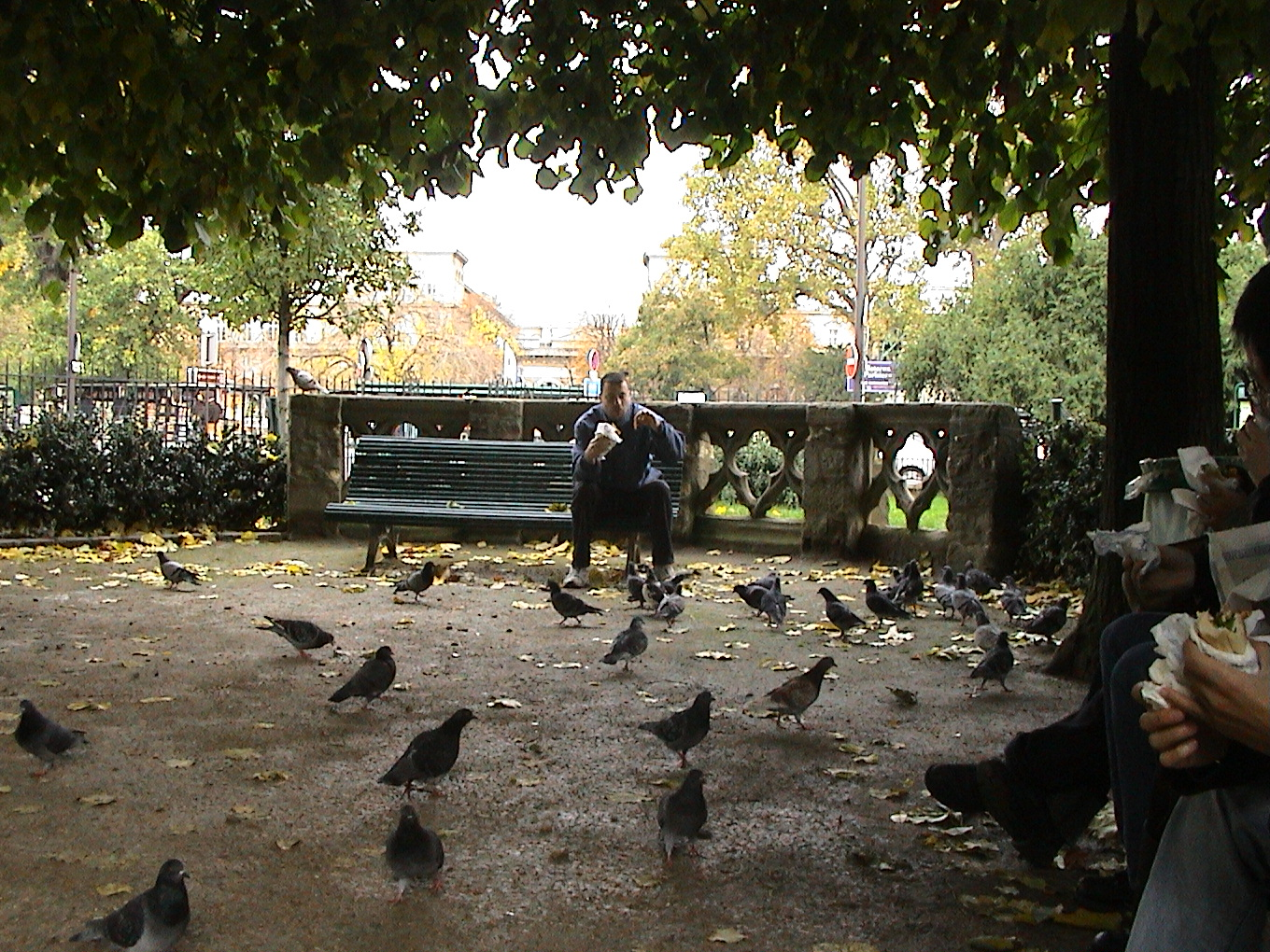 Photo 60 - Pigeons, pigeons!