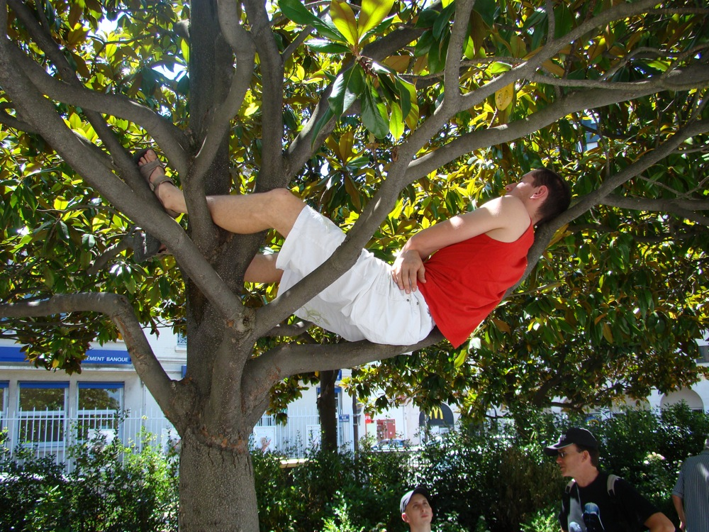 Photo 86 - Dref dans son arbre